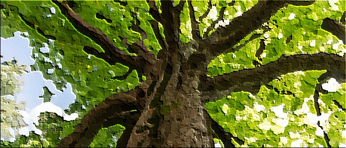 qlik sense extensions featured image gazing up the trunk of a large tree part 2